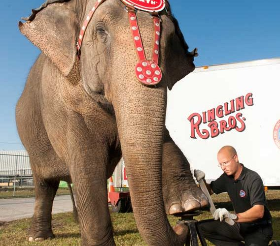 The Ringling Bros. and Barnum & Bailey Circus BUILT TO AMAZE! was packed full of entertainment!