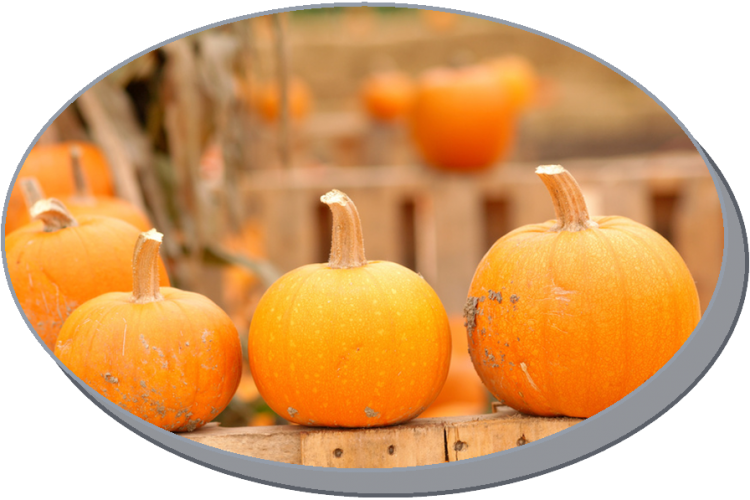 Pumpkin Festival at the Gateway Shopping Center on 10/18