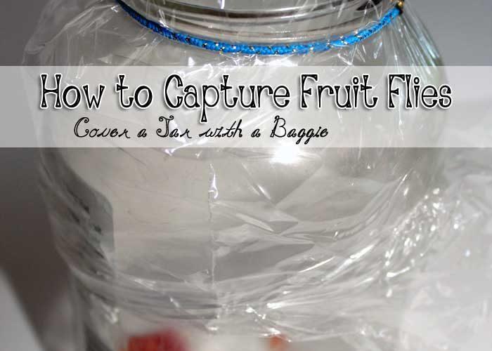 DIY: How to capture fruit flies in a bottle