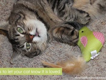 Ways To Let Your Cat Know It Is Loved