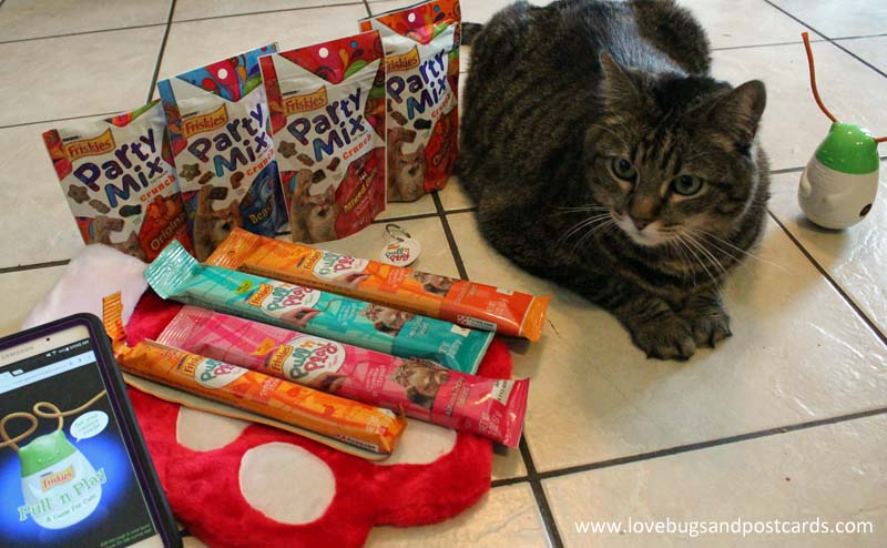 Best Gifts for your Cat + Friskies Giveaway