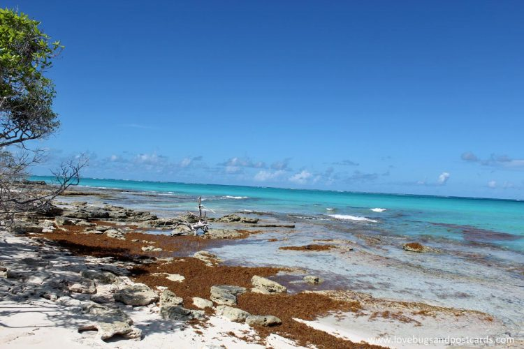 Little Water Cay (Iguana Island) – Turks & Caicos Providenciales