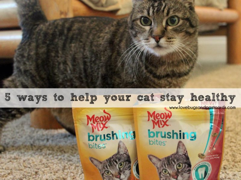 5 ways to help your cat stay healthy