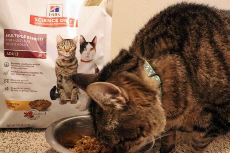 Win $100 toward your next pet vet checkup + $10 Hill's® Science Diet® rebate
