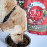 Purina ONE® 28-Day Challenge with Jake