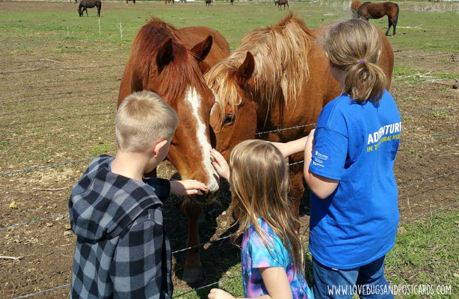 pet horses while visiting a petting zoo or farm