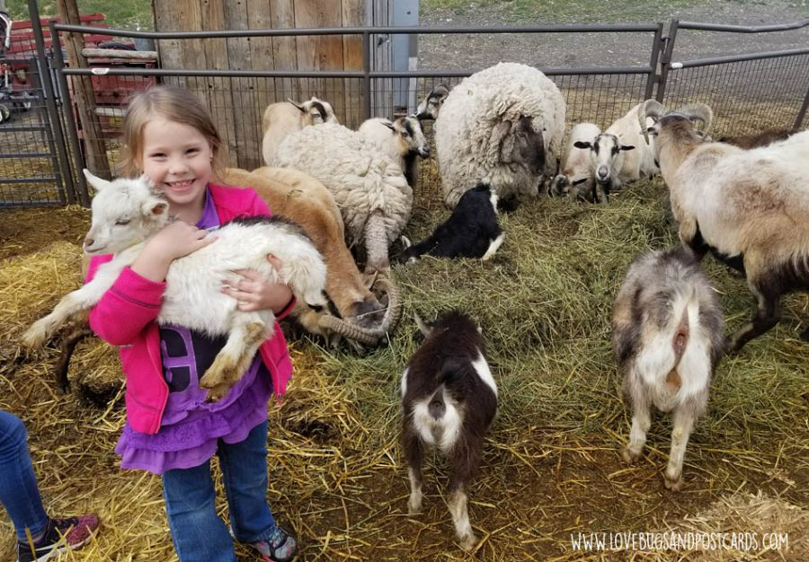 hold baby animals on your trip to the farm