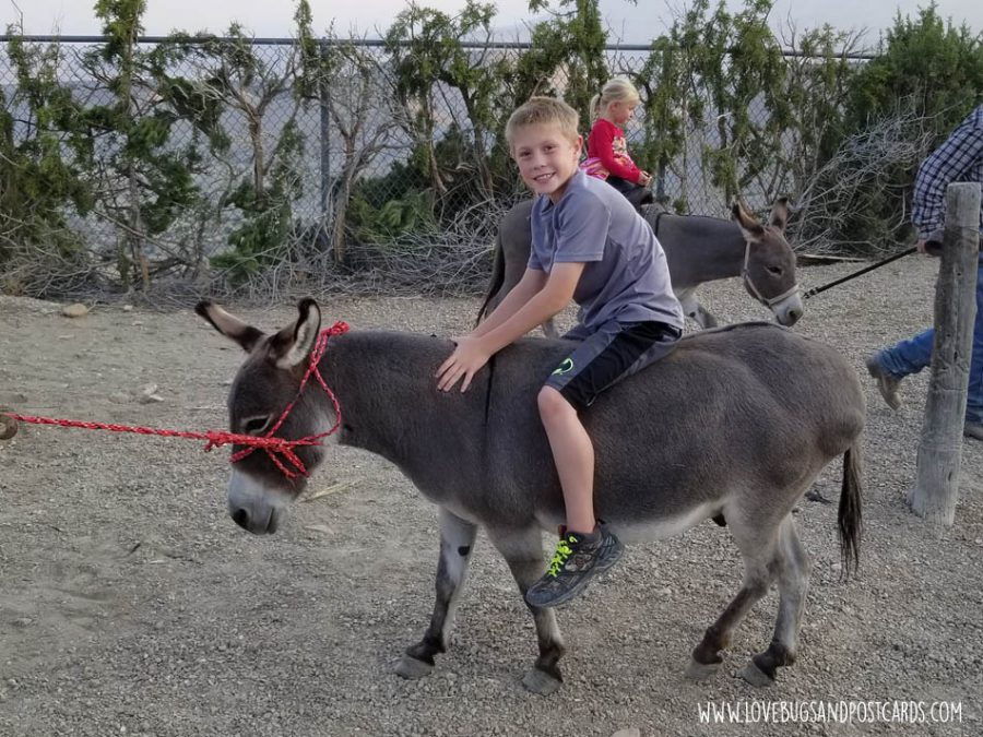 get a ride on a pony or donkey while visiting a petting zoo or farm