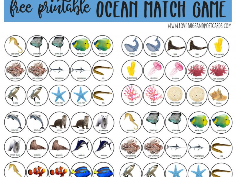 picture about Printable Match Game referred to as Ocean Sport Match Printable + Ocean Crafts for Children