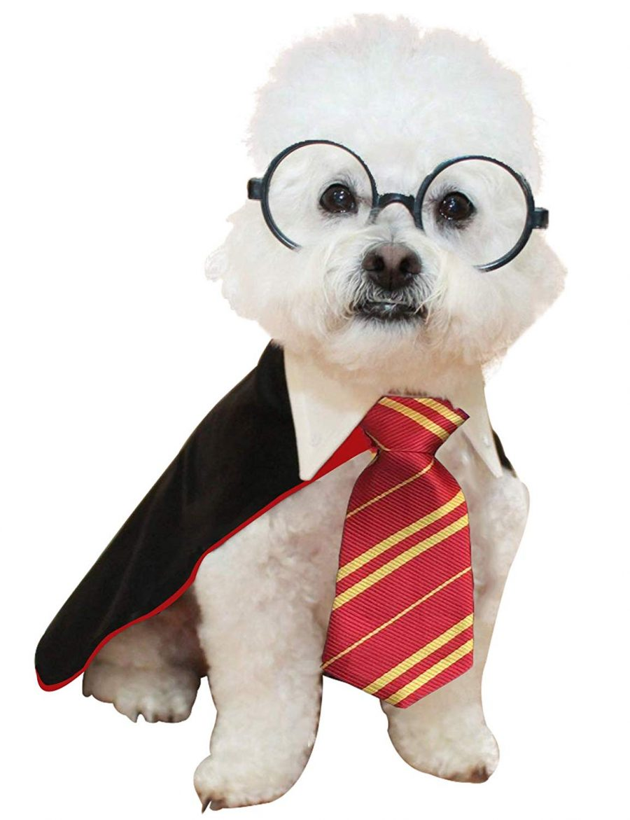 Dog Harry Potter Costume with glasses