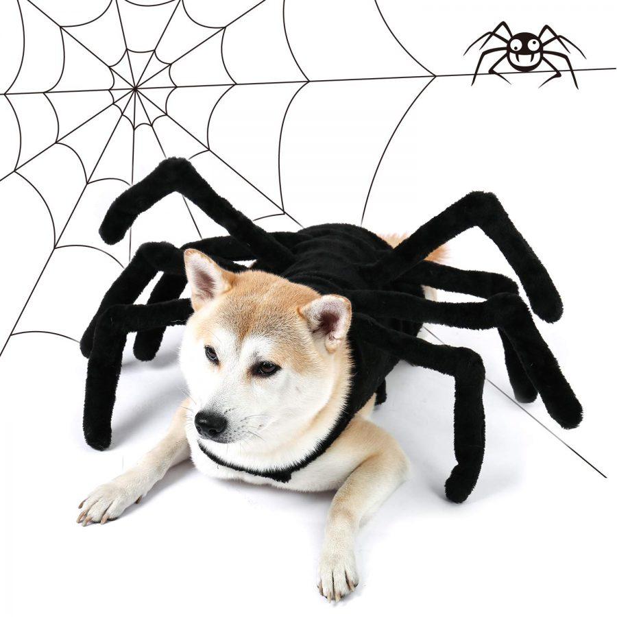 Furry Spider Legs Dog Halloween Costume