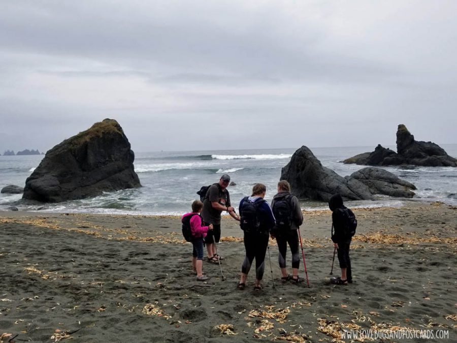 Shi Shi Beach Trail Hike in Washington