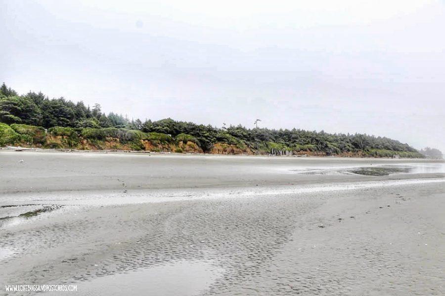 Kalaloch Beach in Washington (Tree of Life)