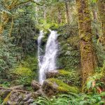 Quinault Rain Forest in Washington