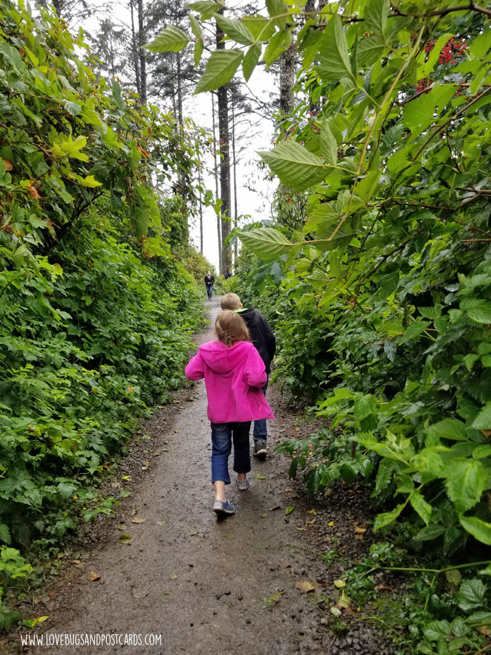 Hiking to Ruby Beach in Washington