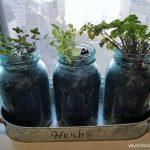 Indoor Herb Garden DIY in mason jars